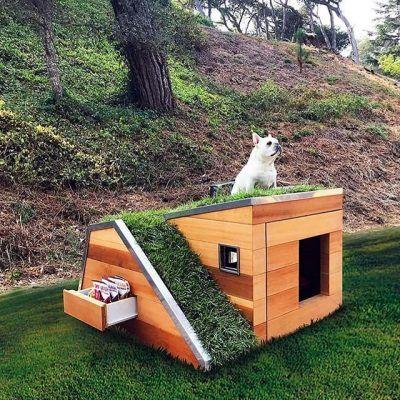 Muebles para perro campestre