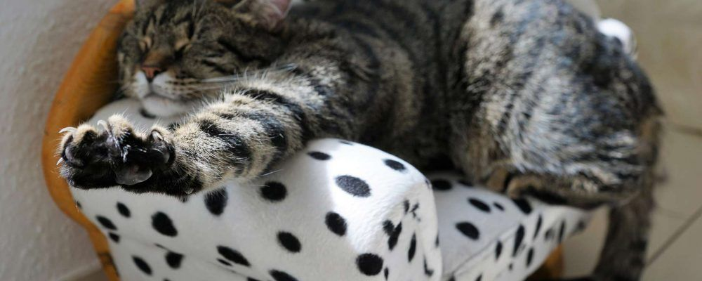 muebles-para-gatos
